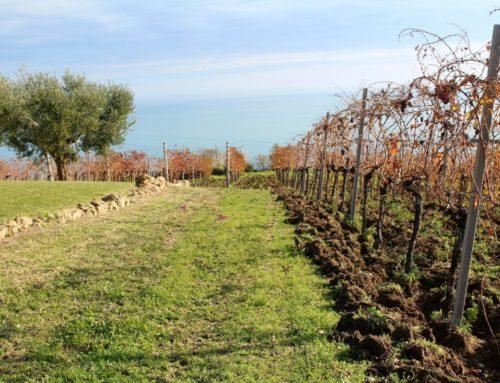 TERRA FAGETO, Azienda vinicola Biologica tra cielo e mare