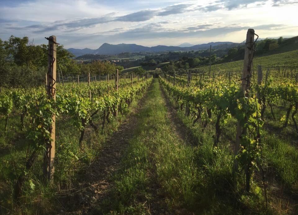 Azienda vitivinicola Socci